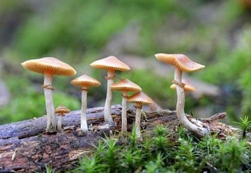 В США узаконили галюциногенні гриби як засіб від депресії