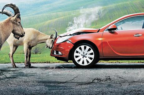 Когда страховая заплатит автовладельцу: 4 примера экстремальных ситуаций