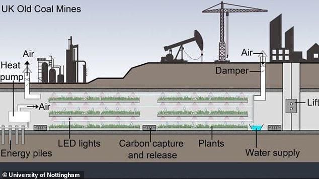 В Британії вигадали, як пристосувати старі вугільні шахти до вирощування в них овочів та зелені