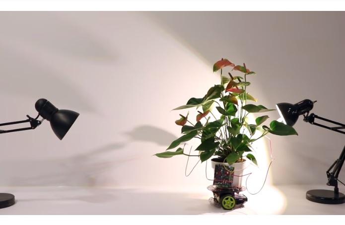 Вчені MIT створили робота, яким керує рослина (ВІДЕО)