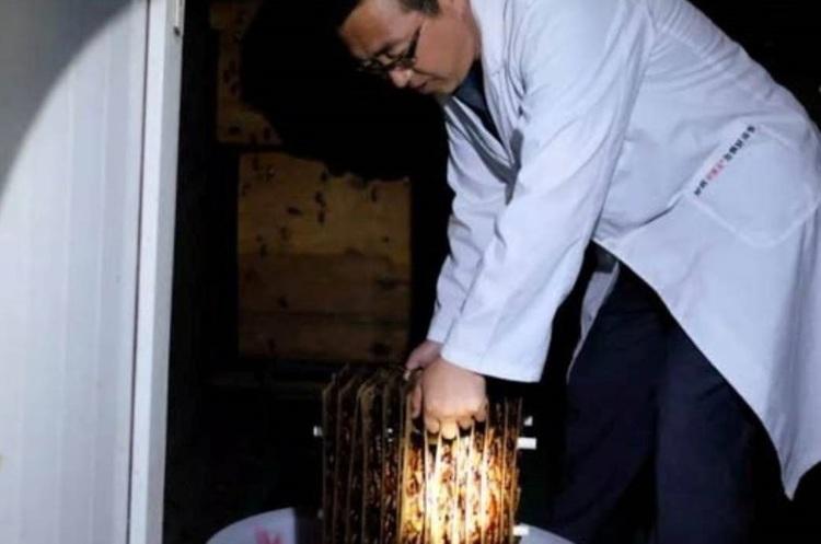 У Китаї стає популярним вирощування тарганів у промислових масштабах