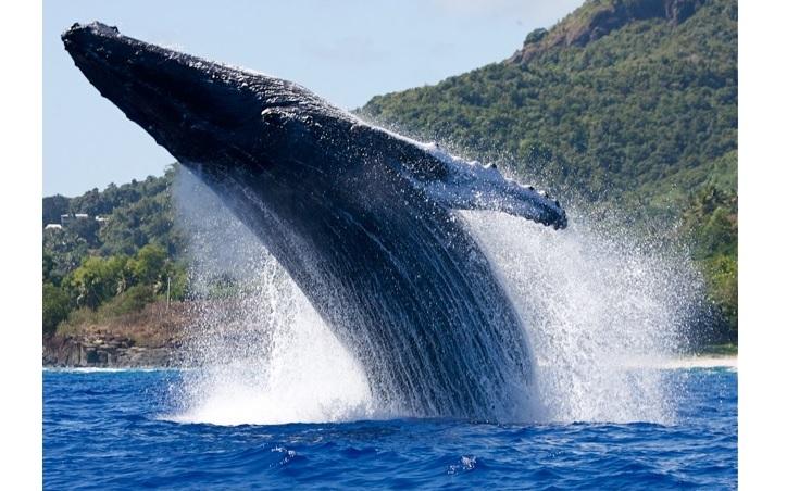Японія заявила, що відновлює китобійний промисел