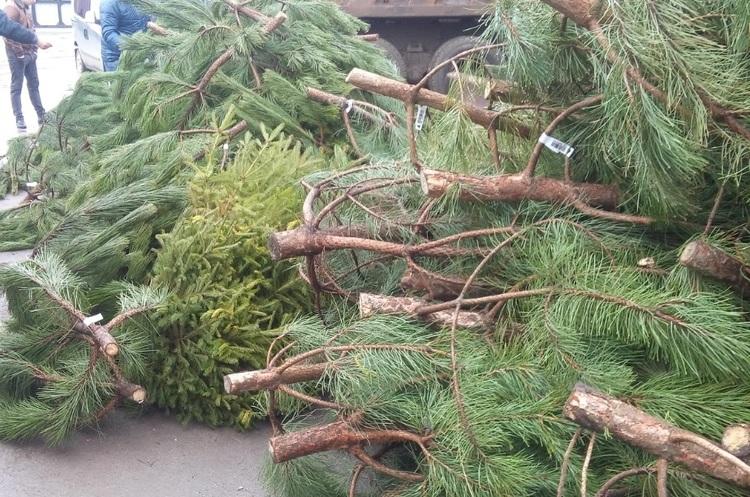 Киян закликають не викидати новорічні ялинки на смітник, а здавати на утилізацію