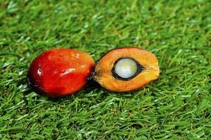 Україна нарощує закупівлю пальмової олії