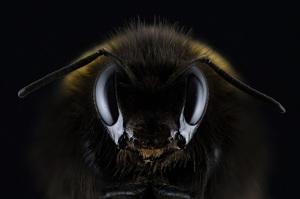 Інтенсивне сільське господарство веде до скорочення комах щороку на 2,5% – вчені