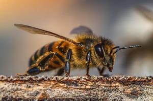 В Україні почали страхувати бджіл