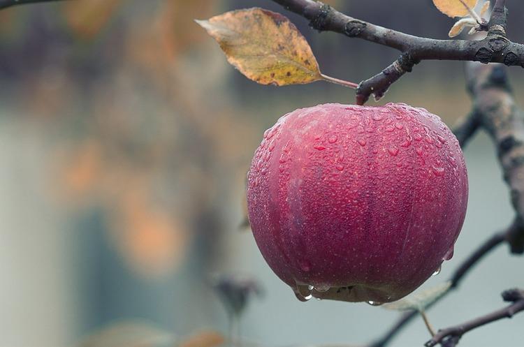 Вперше в Україні страховики відшкодували погодні збитки садоводам