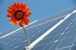 Іноземні й українські інвестори побудують 7 сонячних електростанцій на Житомирщині
