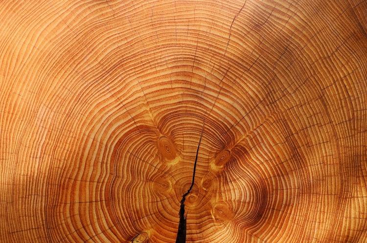 Україна реалізувала деревини на 14,1 млрд грн у 2018 році