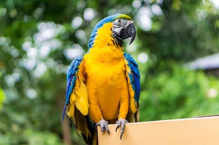 Кабмін схвалив підписання безвізу з Еквадором