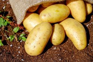 Мінагрополітики: Китай має намір інвестувати в промислову переробку картоплі в Україні