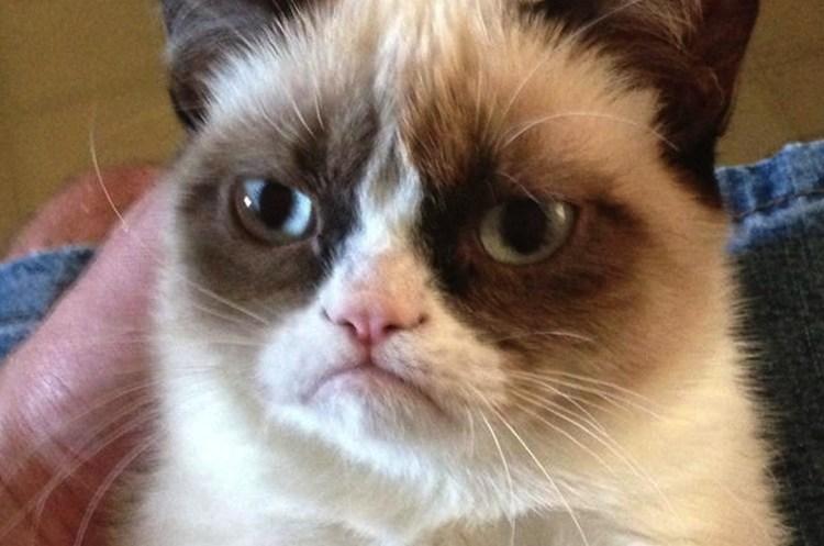В США померла найбагатша кішка світу: Grumpy Cat «заробила» десятки мільйонів доларів