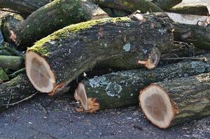 Активісти виступають проти вирубки дерев у Протасовому Яру