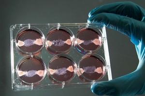 Вчені з Фінляндії навчилися робити «м'ясо» з вуглекислого газу