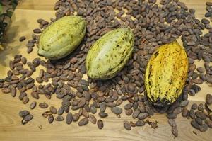 Nestle винайшла нову технологію виробництва шоколаду - без цукру