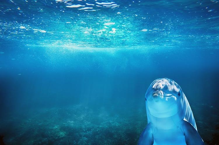 Комісія не може визначити переможця у конкурсі по морській ділянці «Дельфін»