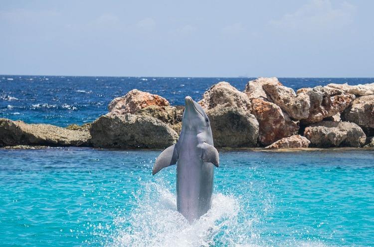 Trident Acquisitions заявила про перемогу в конкурсі на розобку ділянки «Дельфін»