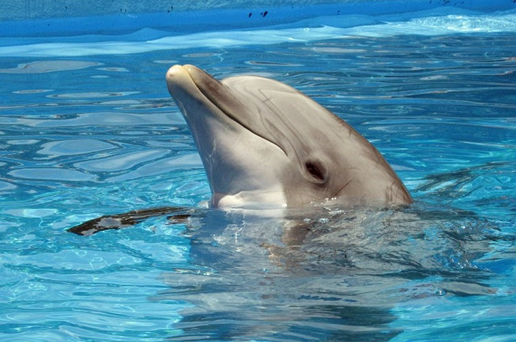 Frontera Resources хоче оскаржити результати конкурсу на розробку ділянки «Дельфін»