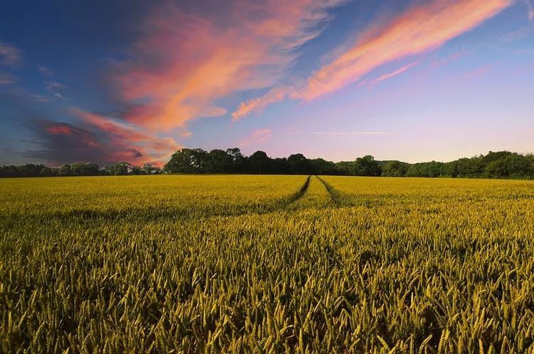 Мораторій на продаж землі може бути скасовано до кінця року – ОПУ