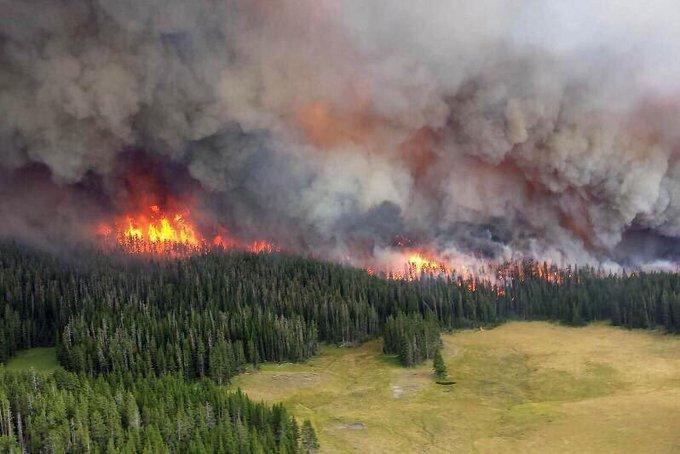 Лісові пожежі в Сибіру вплинуть на клімат по всій планеті – екологи