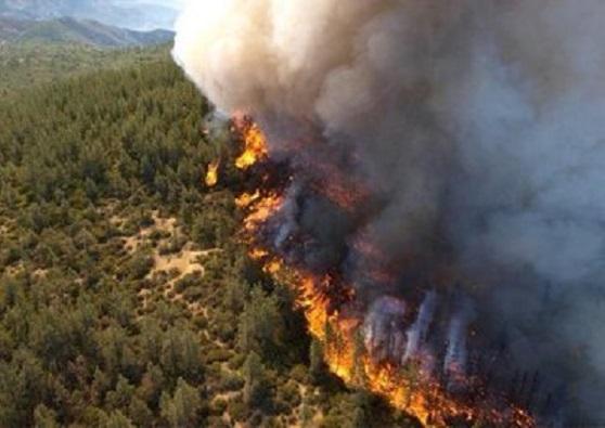 У Красноярському краї РФ оцінили збитки від сибірських пожеж