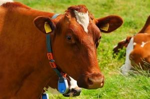 Вчені підрахували, як зміниться світ, якщо всі Сполучені Штати перестануть їсти м'ясо
