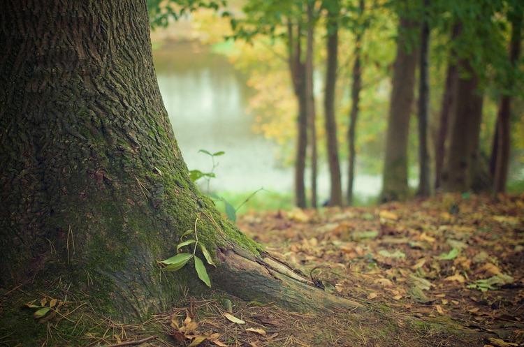 На Житомирщині буде проведено аудит усіх лісгоспів