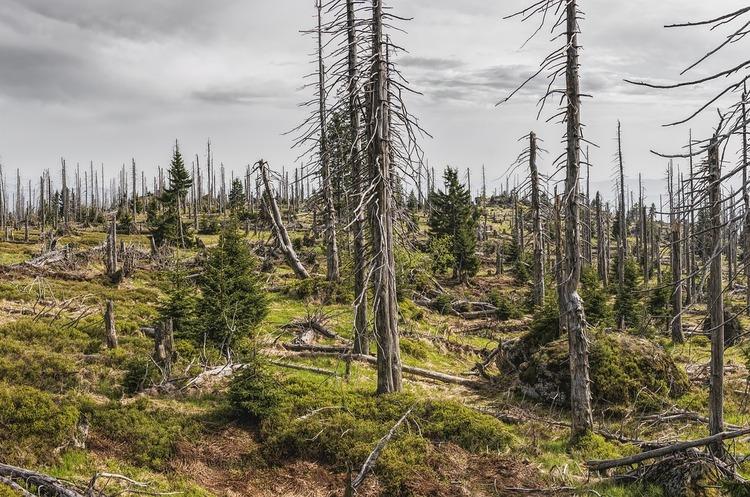 Державну екологічну інспекцію буде ліквідовано – Мінекології