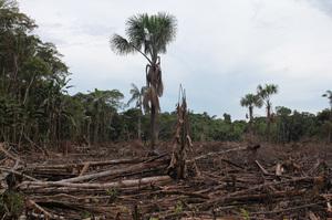 Президент Болсонару заблокував допомогу Норвегії і Німеччини лісам Бразилії