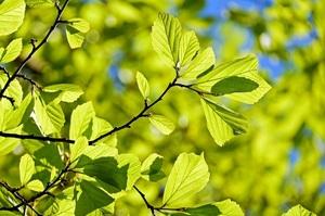 Вчені створили рослину, здатну поглинати з атмосфери в 20 разів більше СО2