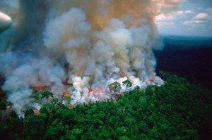 Ліси Амазонії охоплені пожежами, президент Бразилії відкидає допомогу інших країн