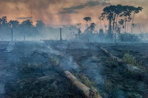 Огнем и мачете: чем грозят пожары в лесах Амазонии
