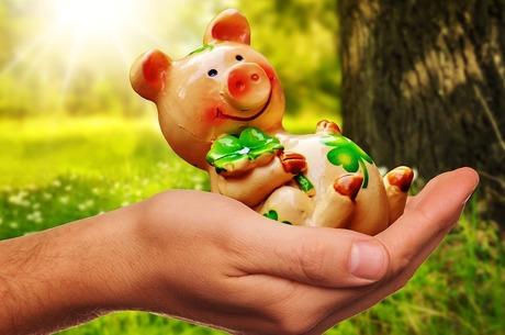Свинське питання: як подолати кризу, викликану АЧС