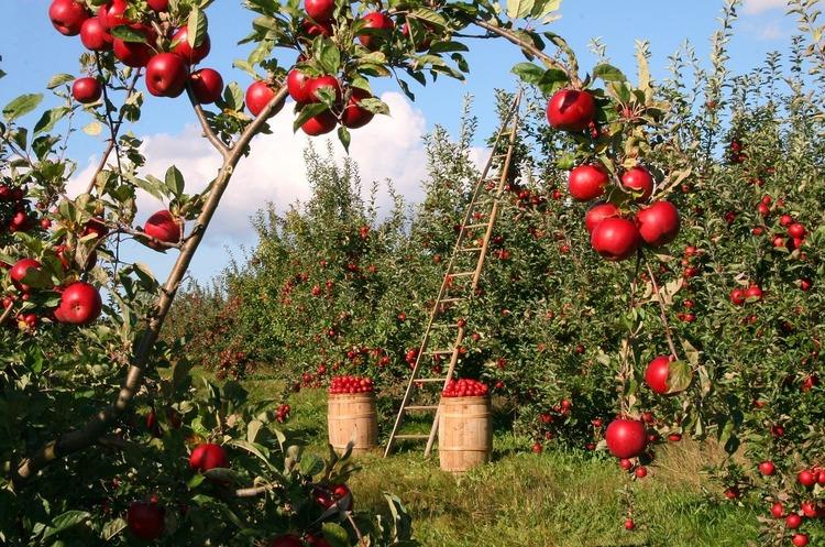 ЄС припинив ввезення деяких овочів і фруктів з України