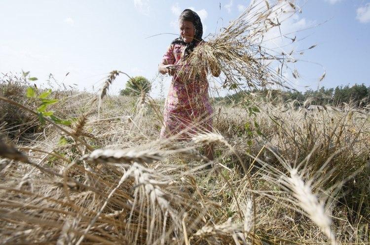 Укрдержфонд перерахував на підтримку  фермерських господарств 138,27 млн грн з початку року