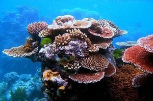 Через загибель коралів Великого бар'єрного рифу Австралія щороку втрачатиме $4 млрд
