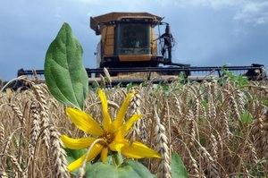 Україна експортувала більше 10 млн тонн зернових