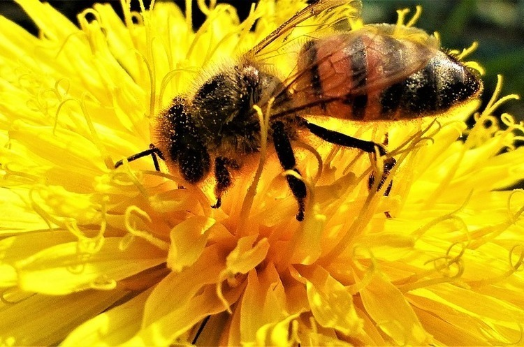У Німеччині почали проект із  захисту комах вартістю 100 млн євро