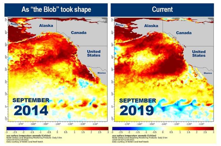 Температура води в Тихому океані піднялася до небезпечного рівня