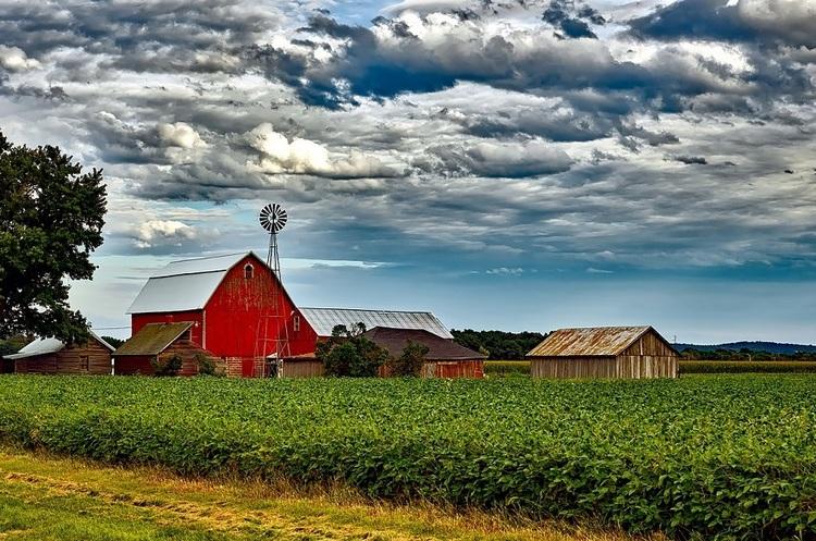 Розмір має значення: через торгову війну великі ферми в США процвітають, а дрібні – занепадають