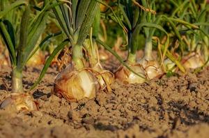 МЕРТ опублікувало законопроєкт про продаж земель сільгосп призначення