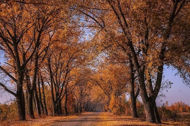 Європі загрожує зникнення 58% дерев – дослідження