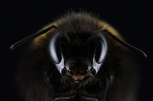 Кількість комах у світі знижується катастрофічними темпами: вчені провели підрахунки