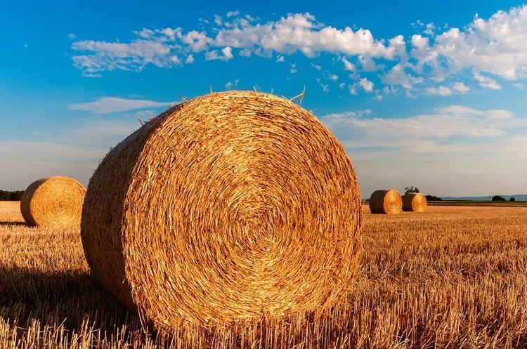 За січень – вересень український аграрний експорт склав $15,8 млрд