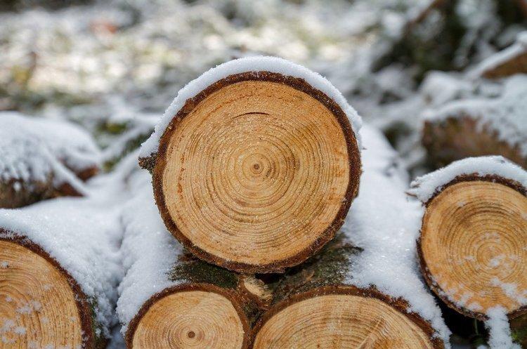 Держліс відкрив свої ціни на деревину