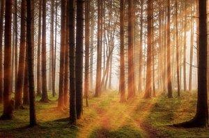 Лес или древесина: как сбалансировать интересы отраслей