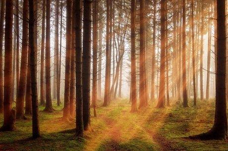 Ліс чи деревина: як збалансувати інтереси обох галузей