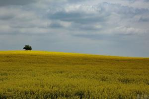У Зеленського повідомили, що в державній власності залишилось лише 7,6 млн гектарів землі