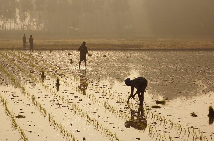 Азія не може себе прогодувати – агросектор регіону потребує $800 млрд інвестицій