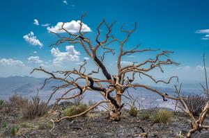 В ООН заявили, що нинішнє десятиліття стане найспекотнішим за усю історію